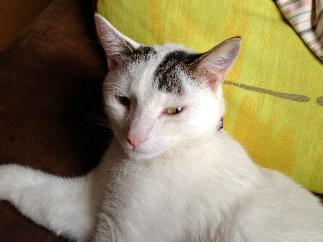 Catdrop